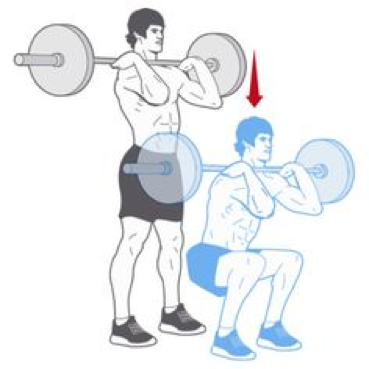 The Trust Exercise Highlight Of The Week The Front Squat